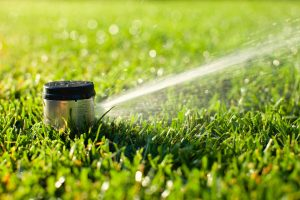 Close up of a popup sprinkler head wattering a lawn. Moore's irrigation installs lawn sprinkler systems in Omaha.