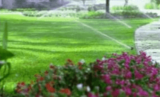 Lawn sprinkler system watering a lawn with a flower bed in the foreground.