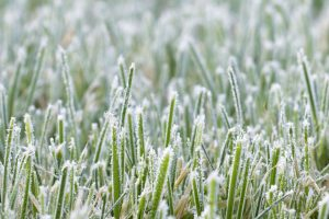 Closeup with grass that has frost on the blades. Moore's Irrigation can provide lawn sprinkler system winterization systems.